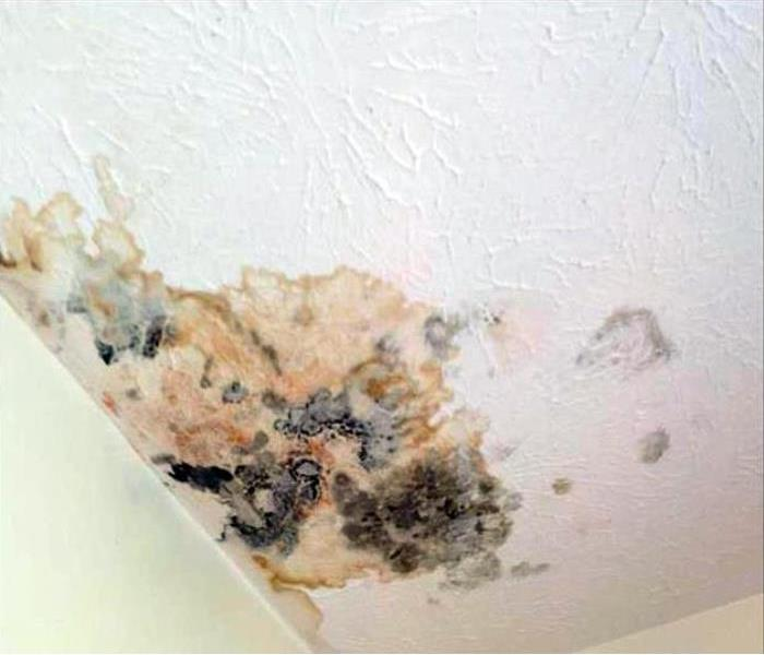 Mold Damage Remediation In Raleigh Before