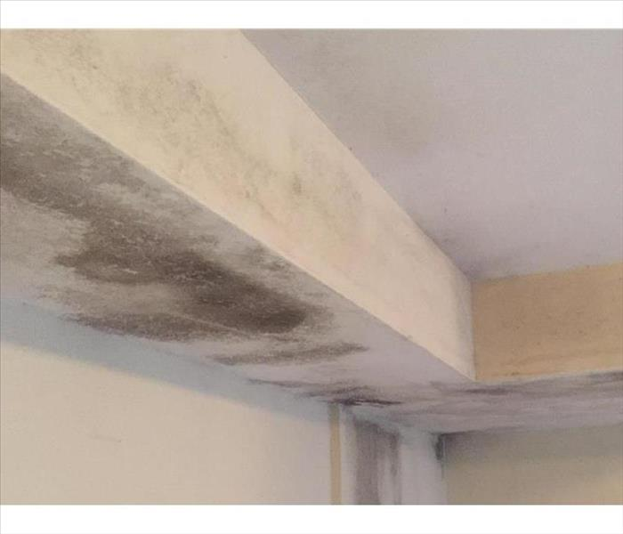 New Hope for a Ceiling Damaged with Mold