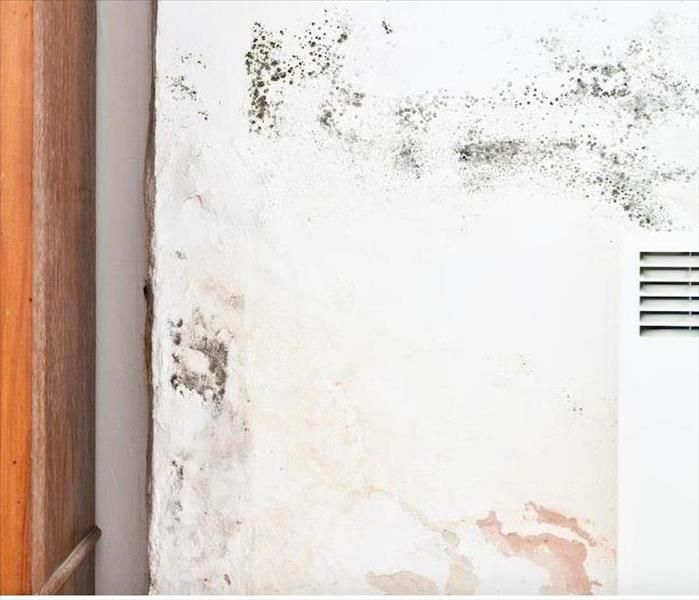 Mold Remediation How To Remove Mold From Your Wake Forest Home