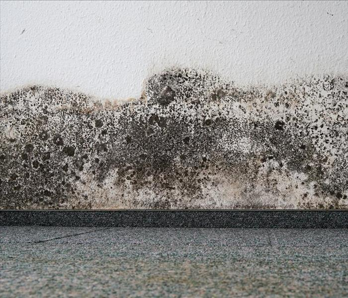 Mold Remediation What to Do (and What to Avoid) When Dealing With Mold Damage in Wake Forest
