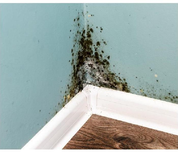 Mold Remediation Why Safety is Important When Removing Mold From Your Wake Forest Home
