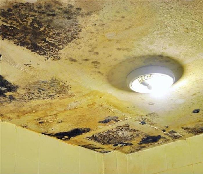 Mold Remediation Mold Damage can Spread From Wet Bathrooms Throughout Your Wake Forest Home