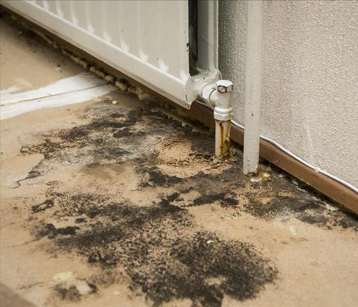 Mold Remediation Mold Damage Cleanup from a Leaky Pipe in Your Wake Forest Home