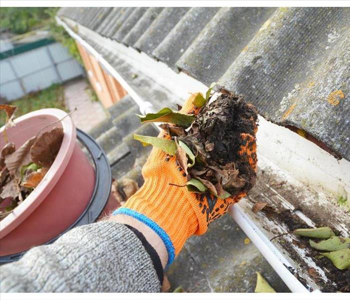 A hand holding leaves of a dirty gutter