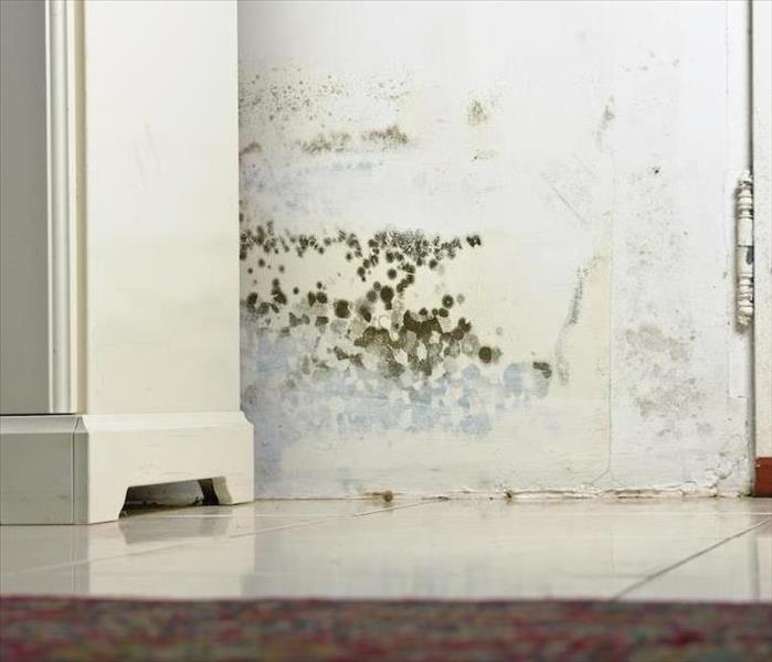 Mold Remediation Understanding the Basics of Mold Damage to Your Raleigh Home